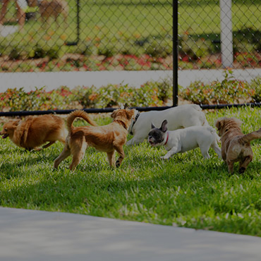 Large Dog Park at Pine Valley Apartments